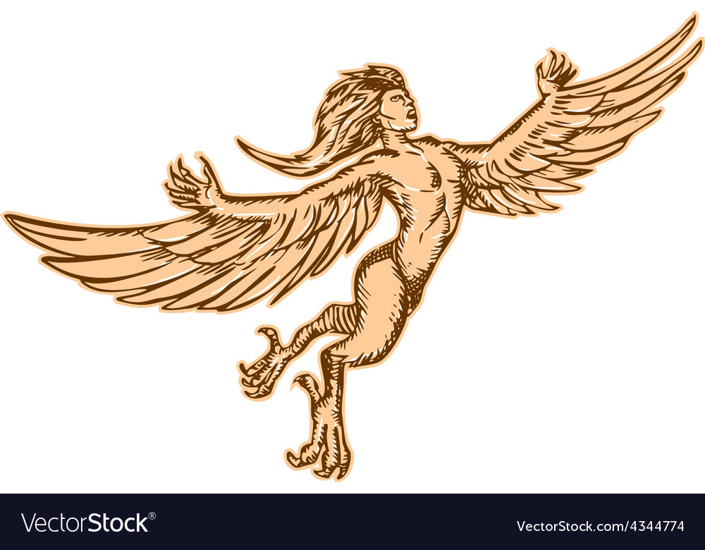 harpy flying front etching royalty free vector image
