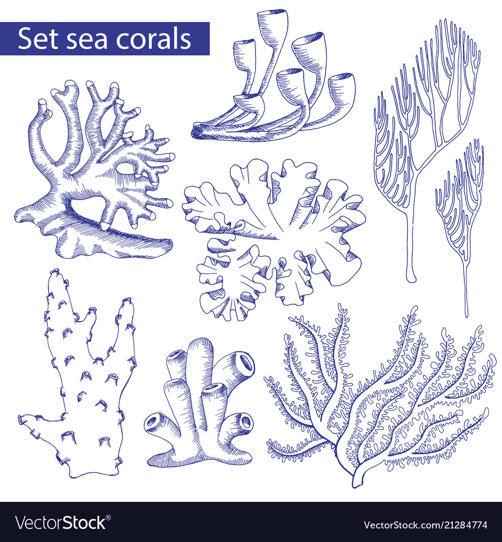 Set Corals Sketch Underwater Plants Royalty Free Vector
