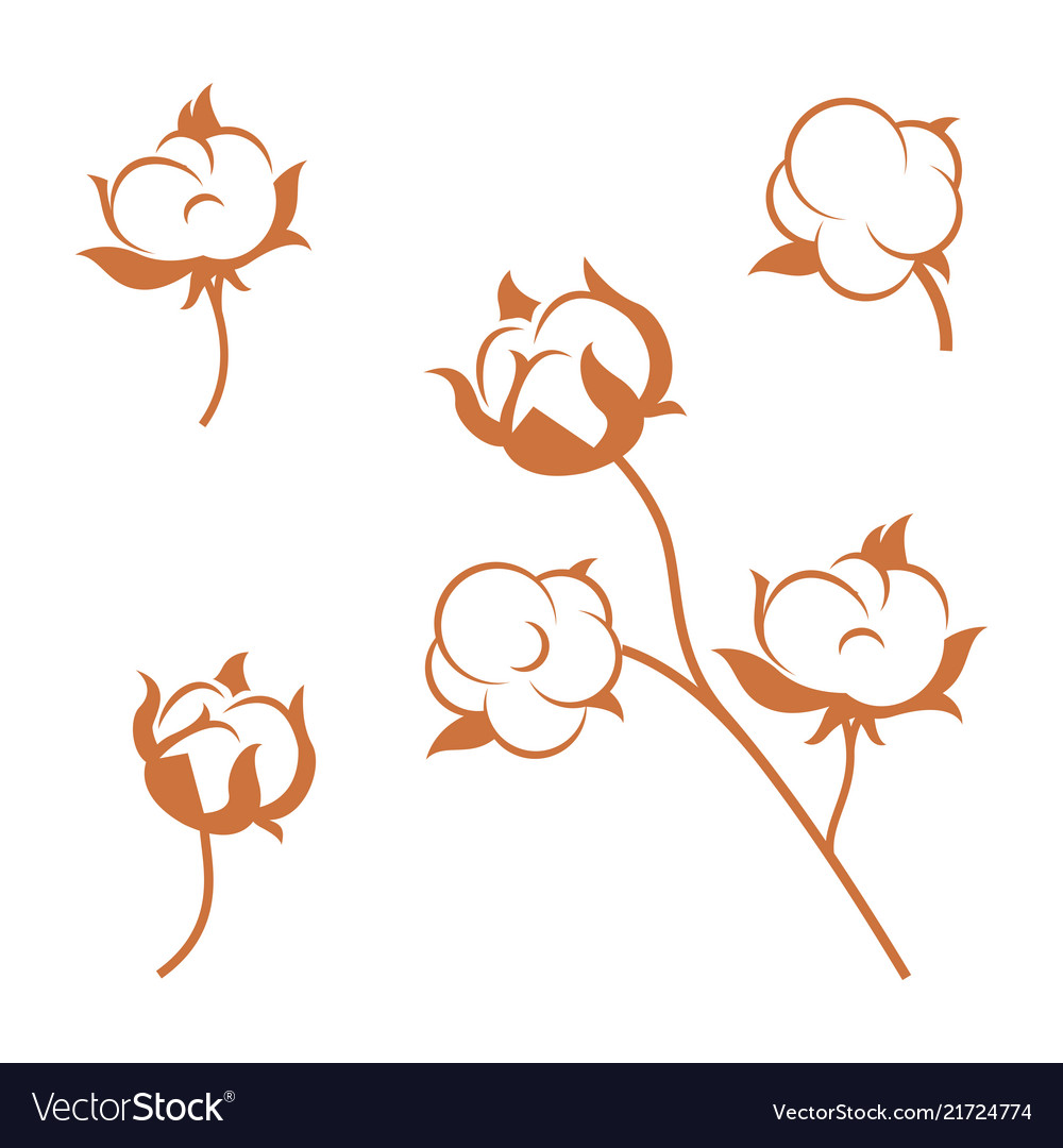 Set of cotton plant flowers isolated on white