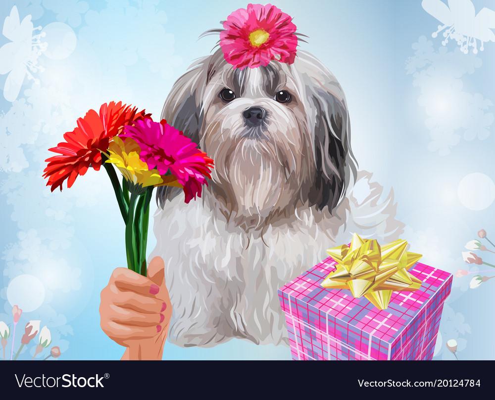 Shih tzu dog gift Royalty Free Vector