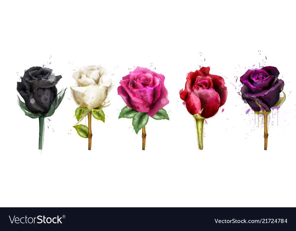 Watercolor colorful roses set collection