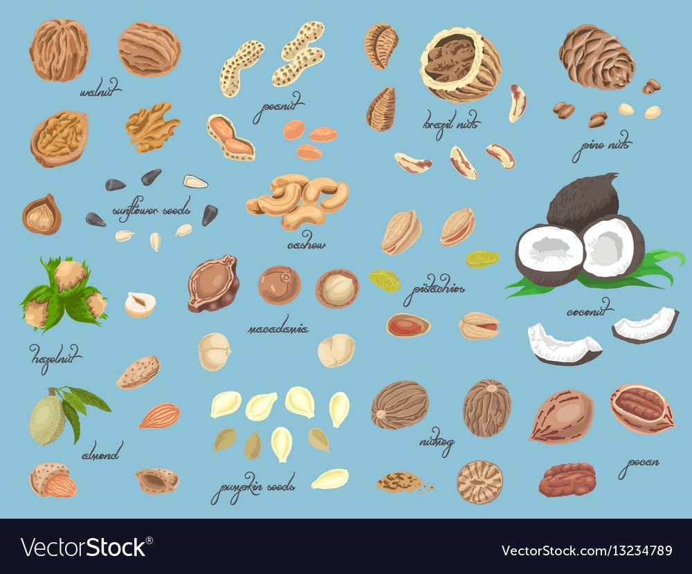 Big collection of isolated colored nuts and seeds vector image