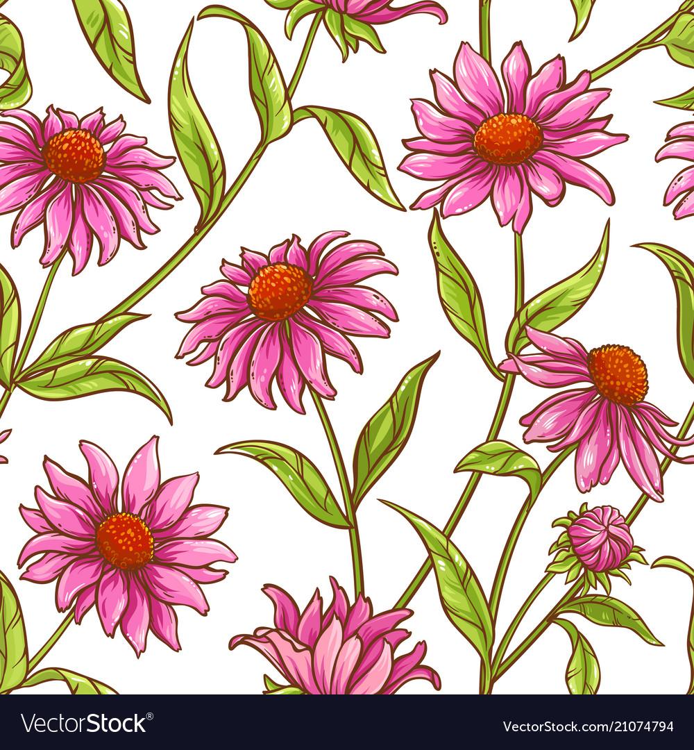 Echinace purple pattern