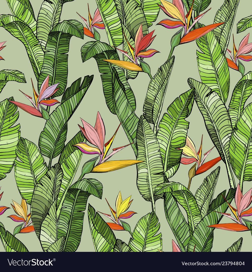 Seamless pattern with strelitzia bird paradise