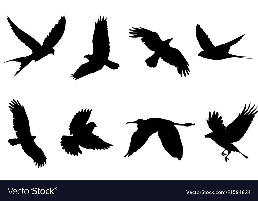 Bird animal cartoon shape form silhouette