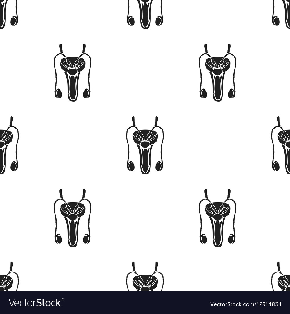 Male reproductive system icon in black style vector image
