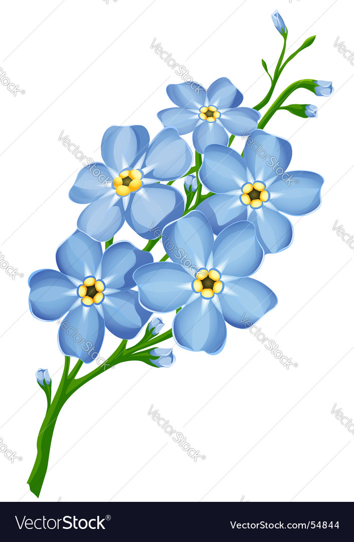 Forget Me Not Flowers Royalty Free Vector Image