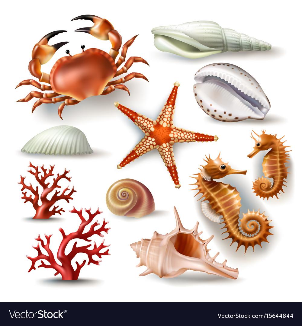 Set of seashells coral crab