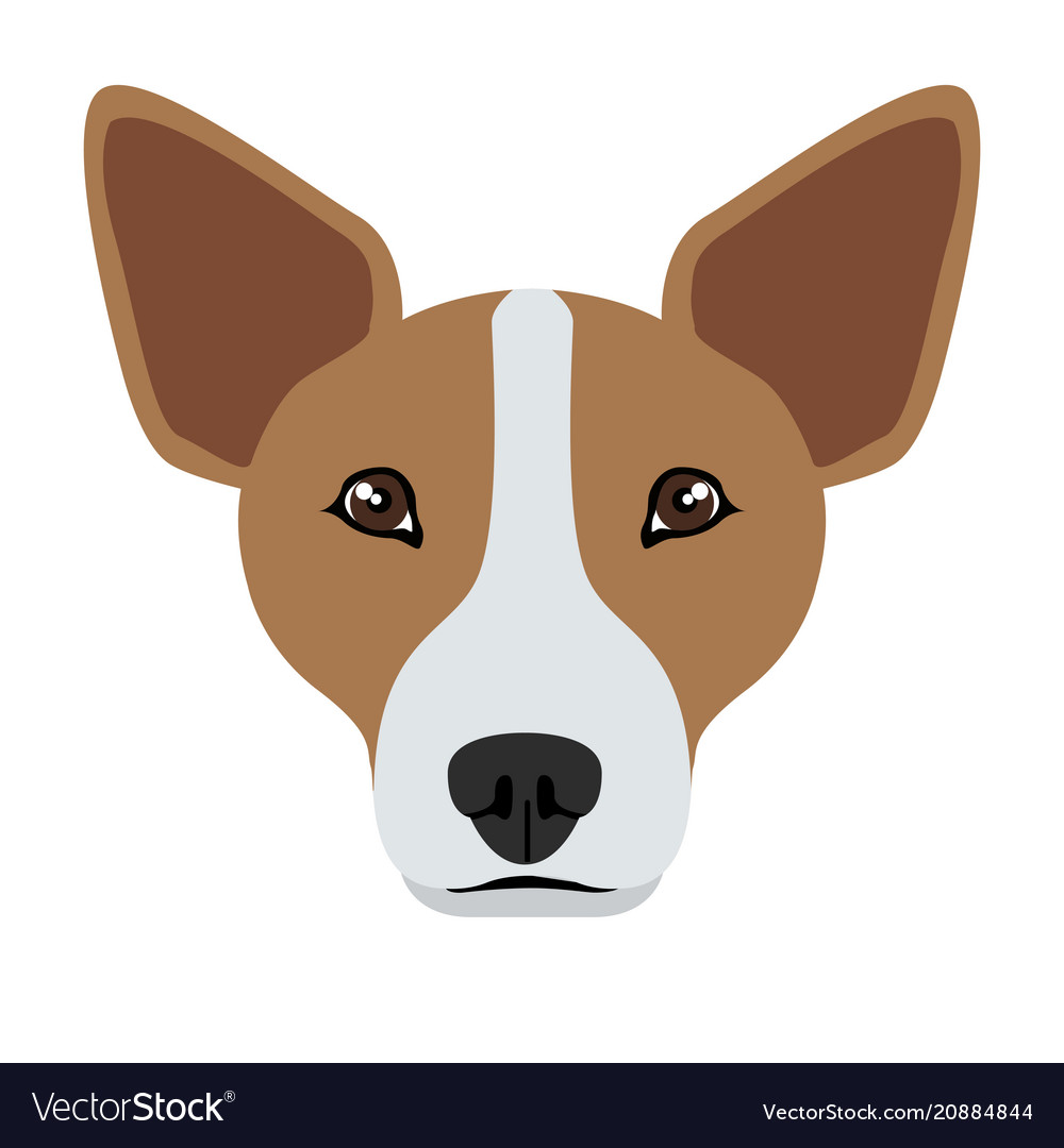 Welsh corgi avatar