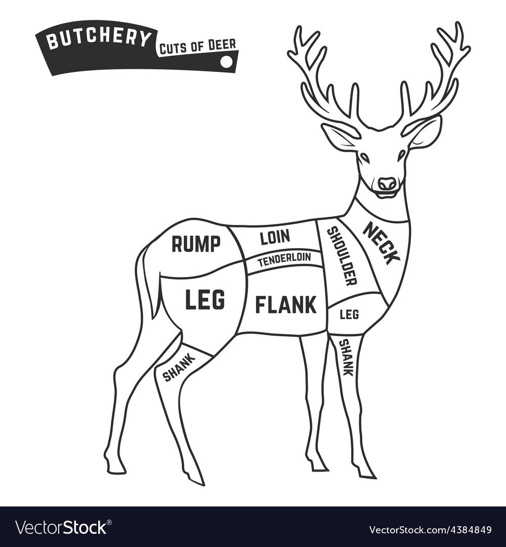 butcher deer vector images 43 Deer Organs Labeled