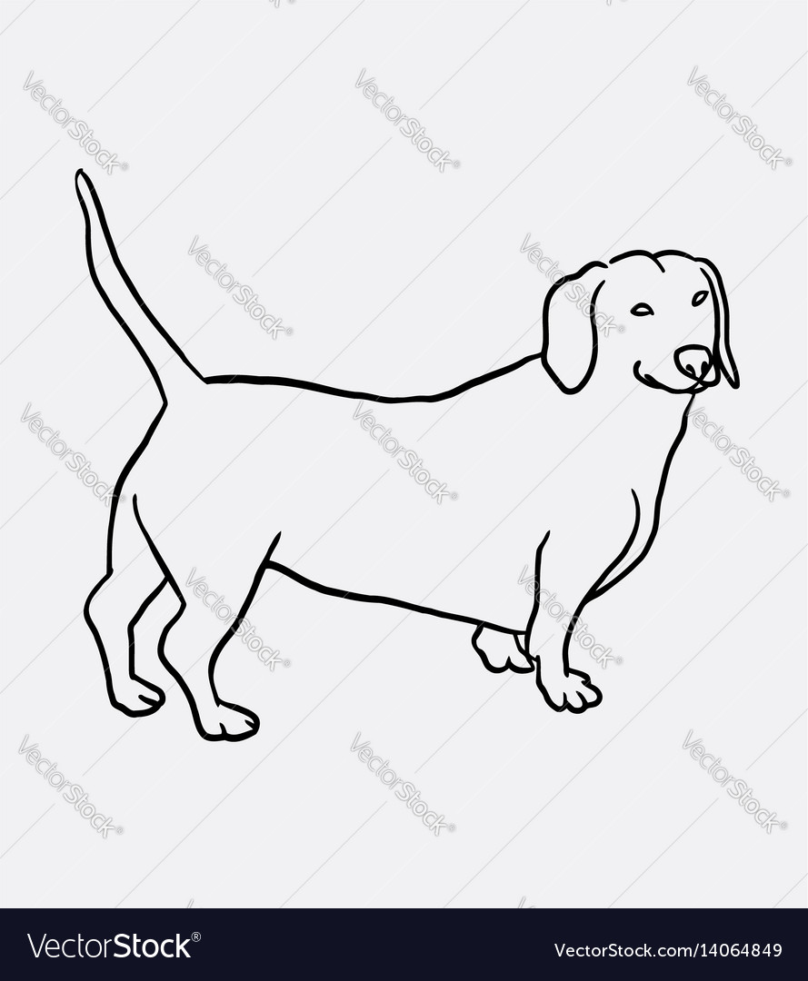 Teckel dog hand drawing vector image