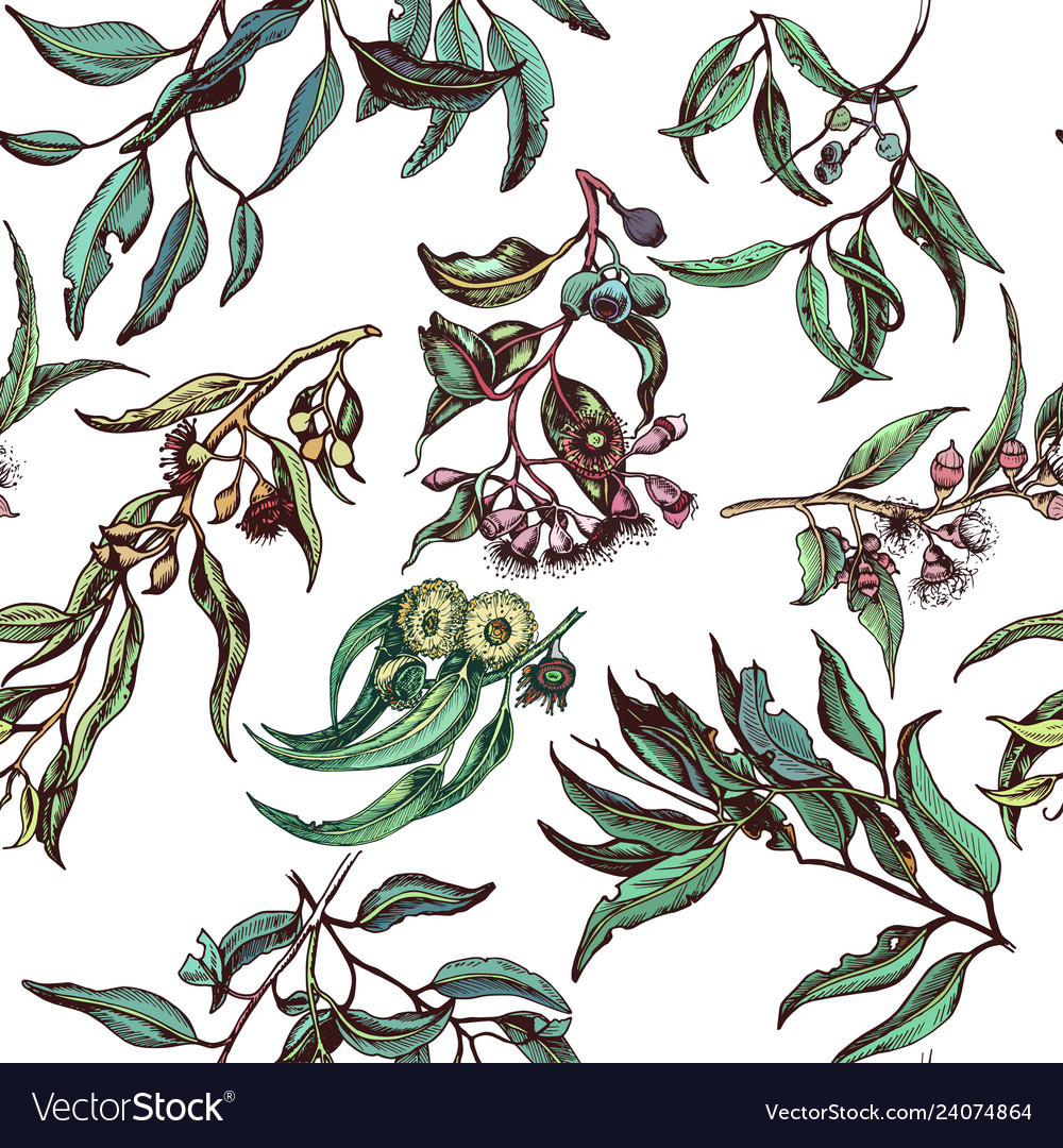 Hand drawn pattern with eucalyptus succulent