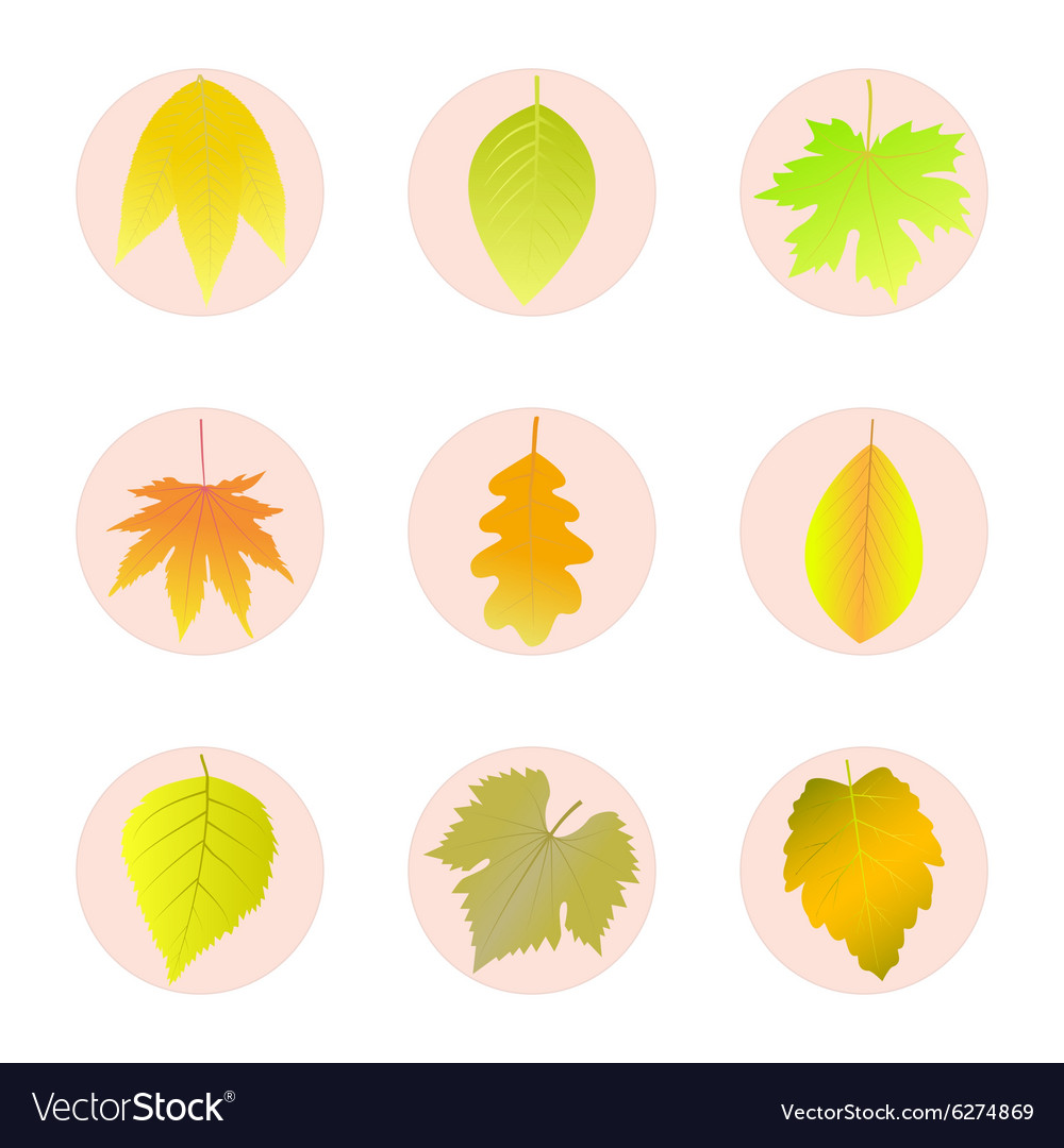 Set of icons autumn leaves