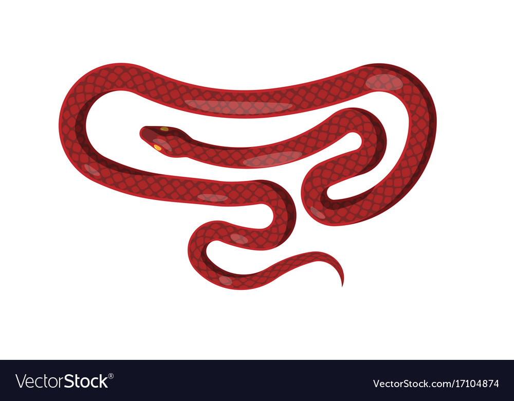 Red snake isolated cartoon reptile