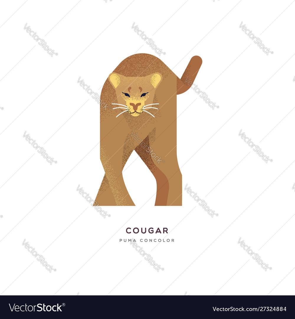 Wild cougar cat isolated animal cartoon