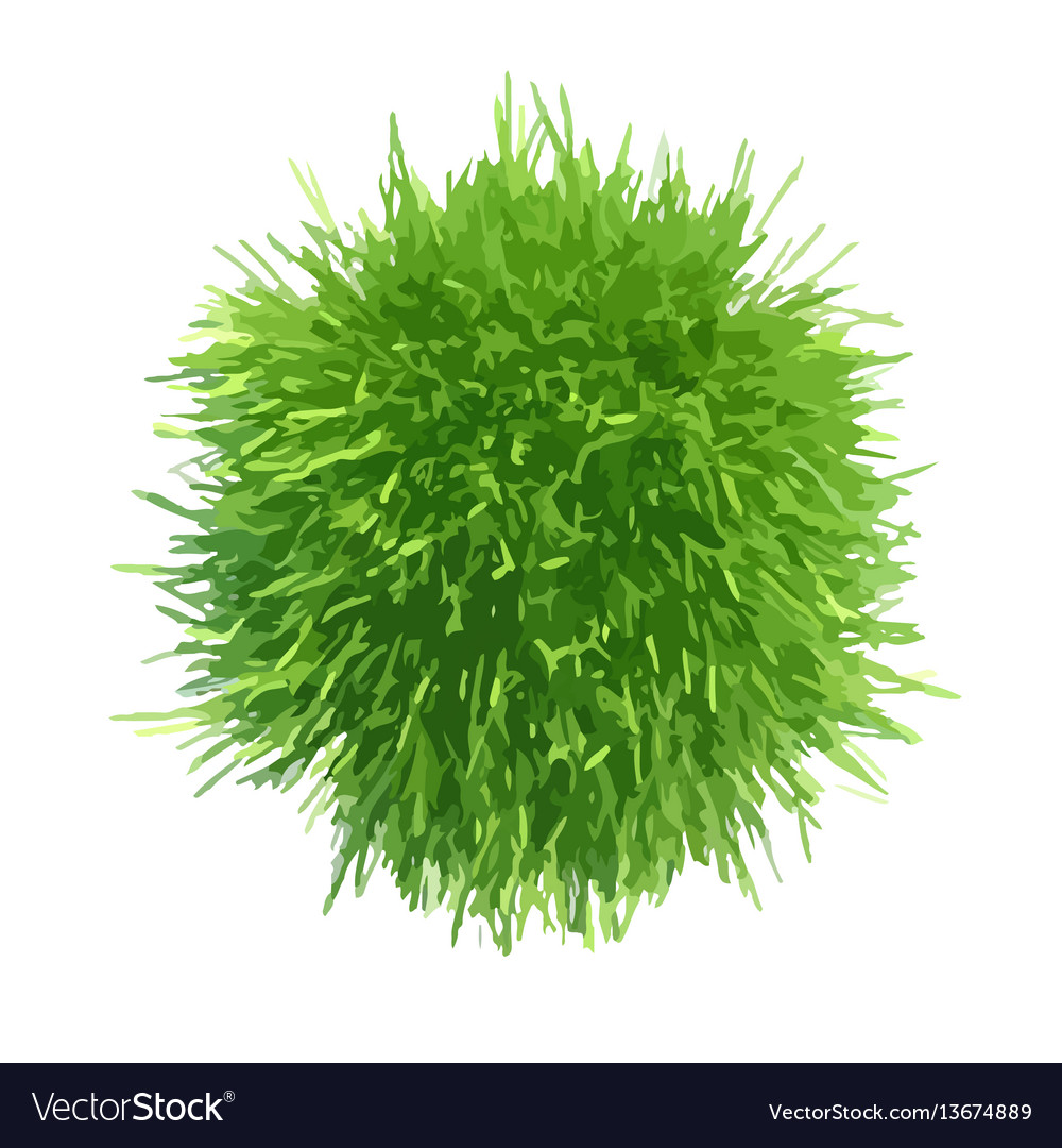 Fresh green grass piece vector image