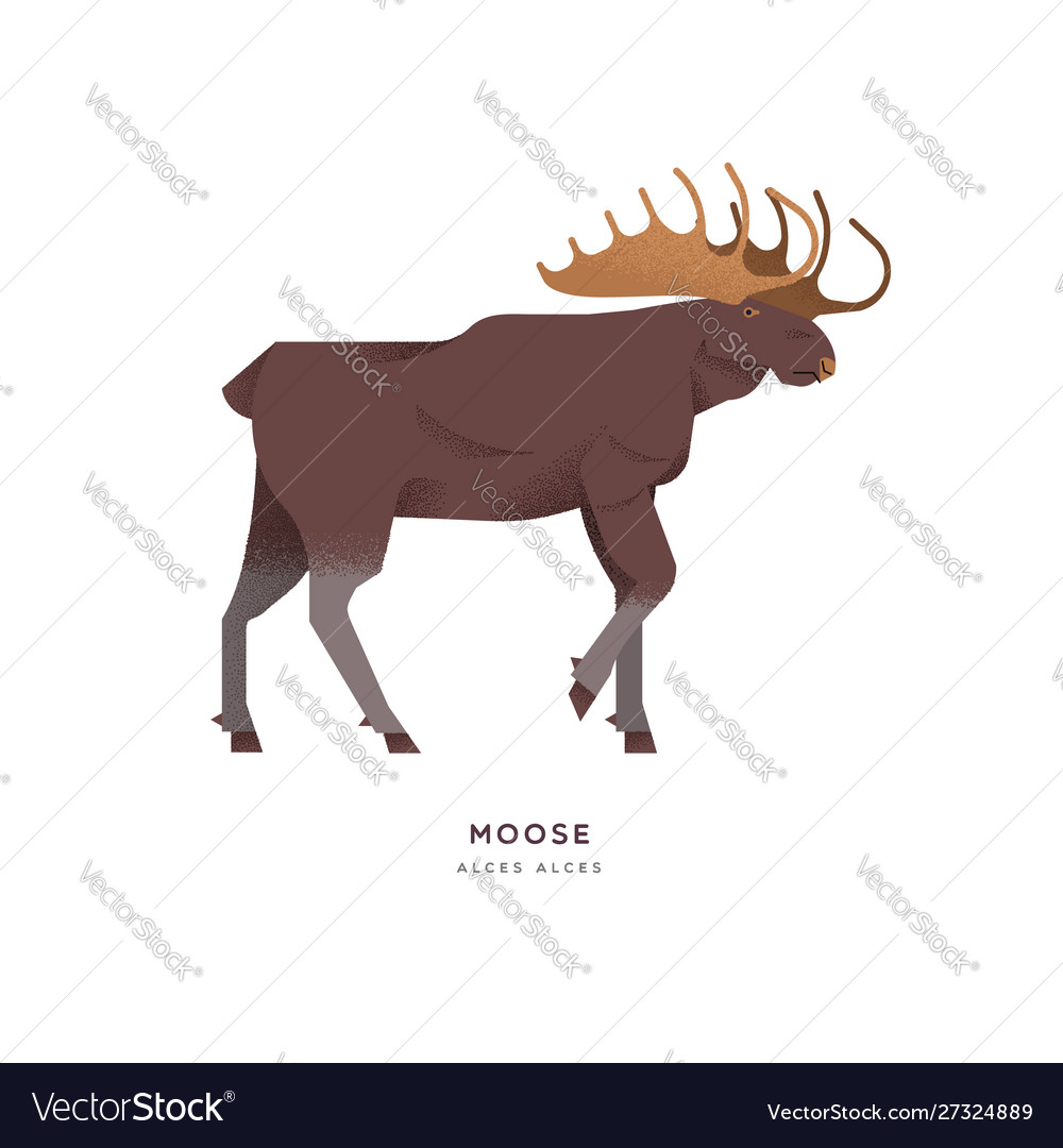 Wild moose elk isolated animal cartoon