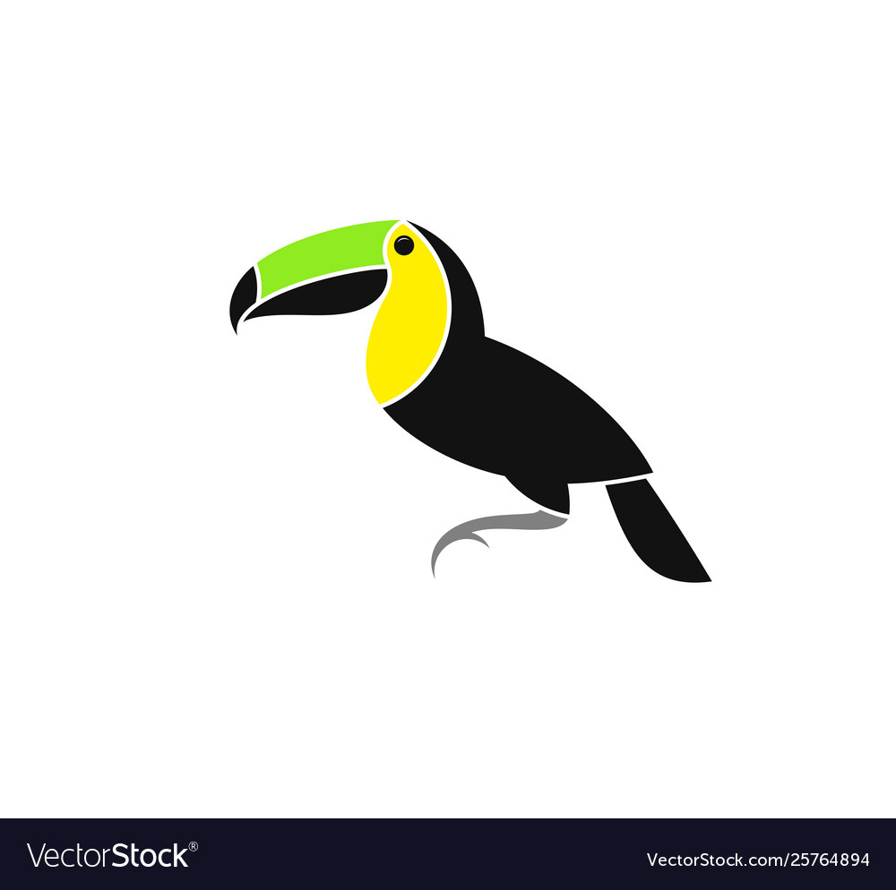 Toucan from costa rica