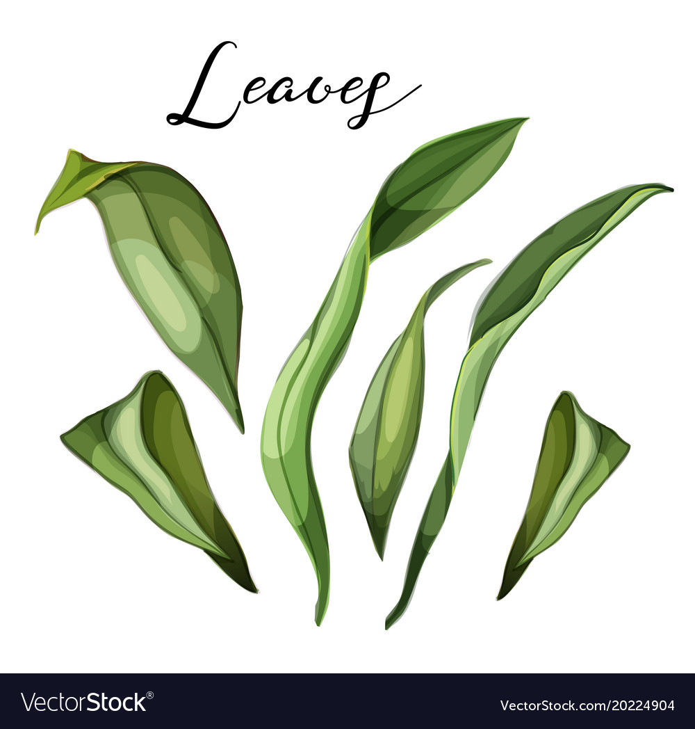 Hand drawn lily leaves on branch set