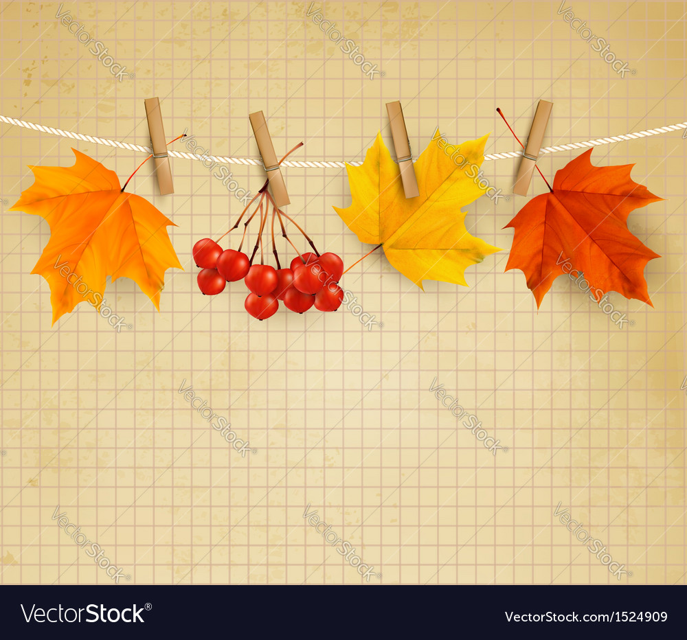 Autumn background with colorful autumn leaves
