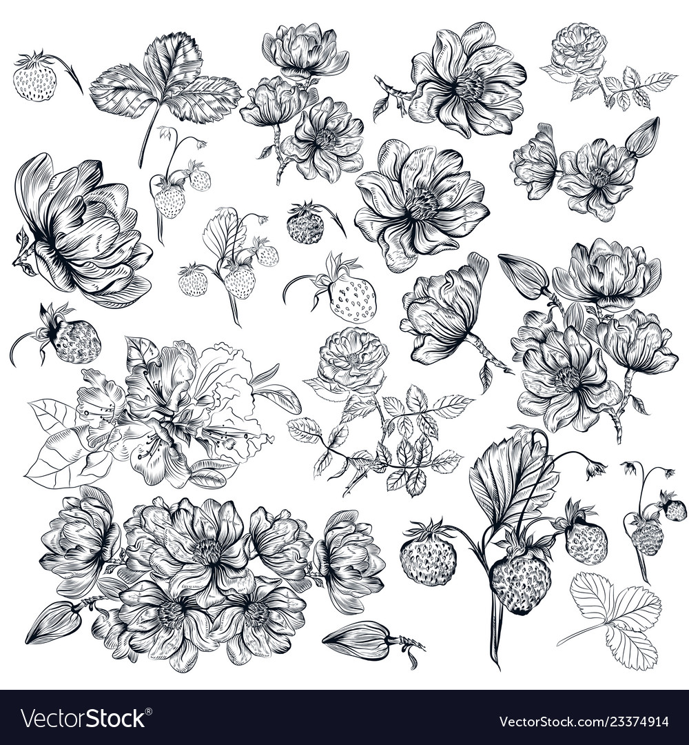Pack of engraved high detailed flowers for design