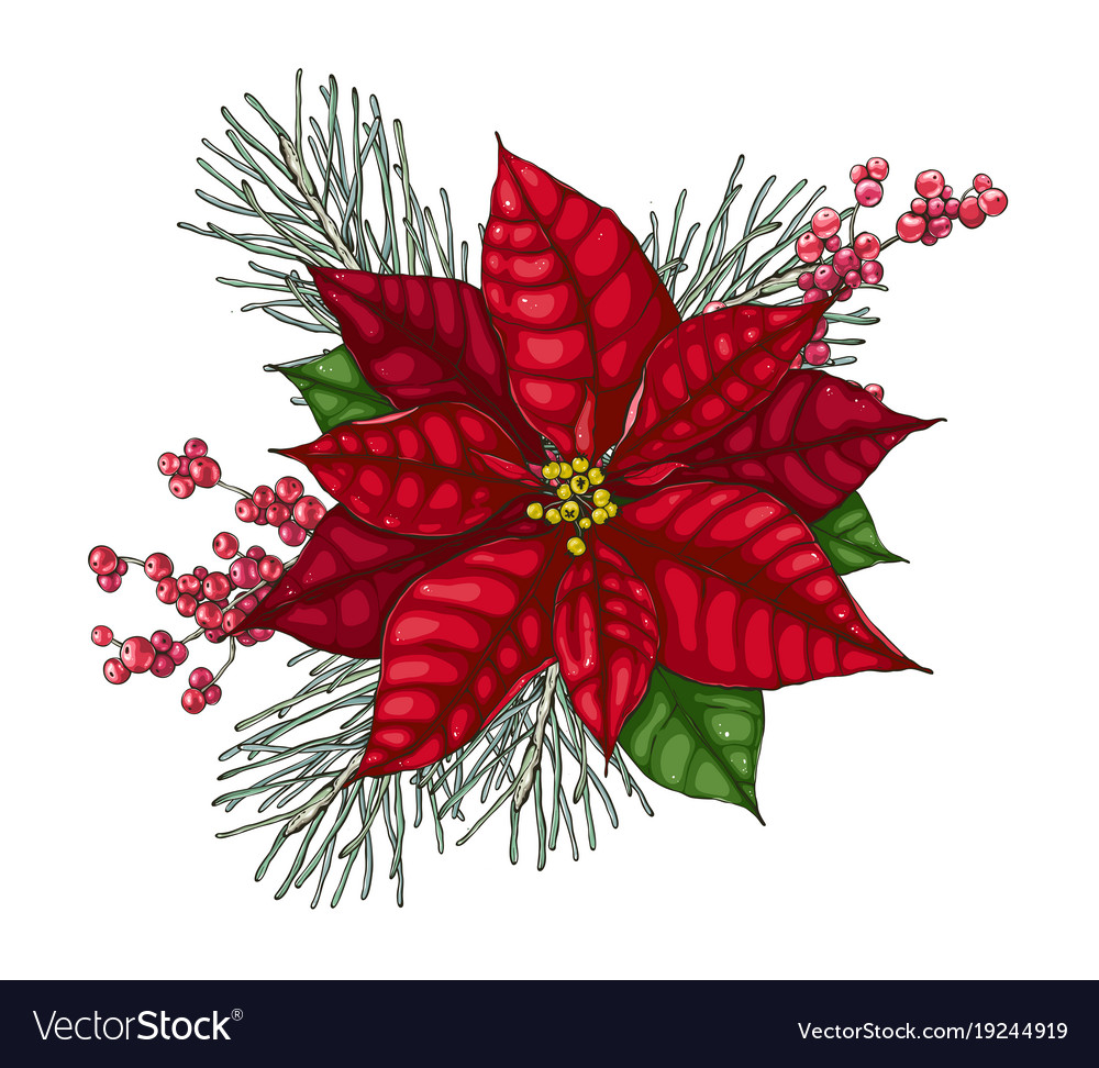 christmas decoration with red poinsettia vector image - Poinsettia Christmas Decorations