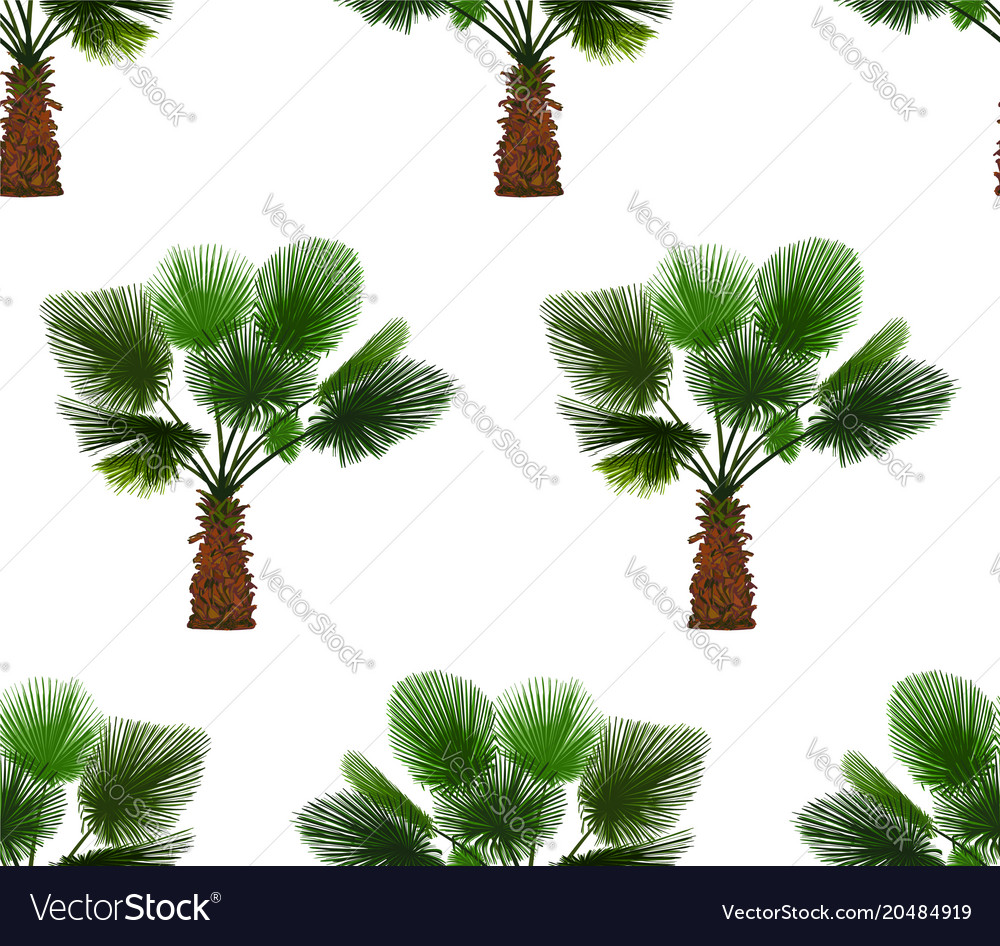 Seamless pattern of color palm Royalty Free Vector Image