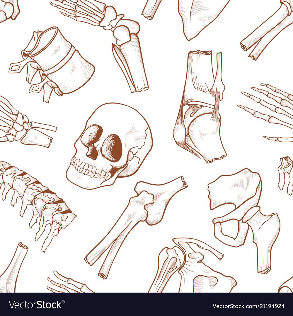 Human bone background