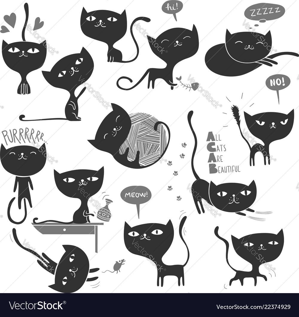 13 black cats