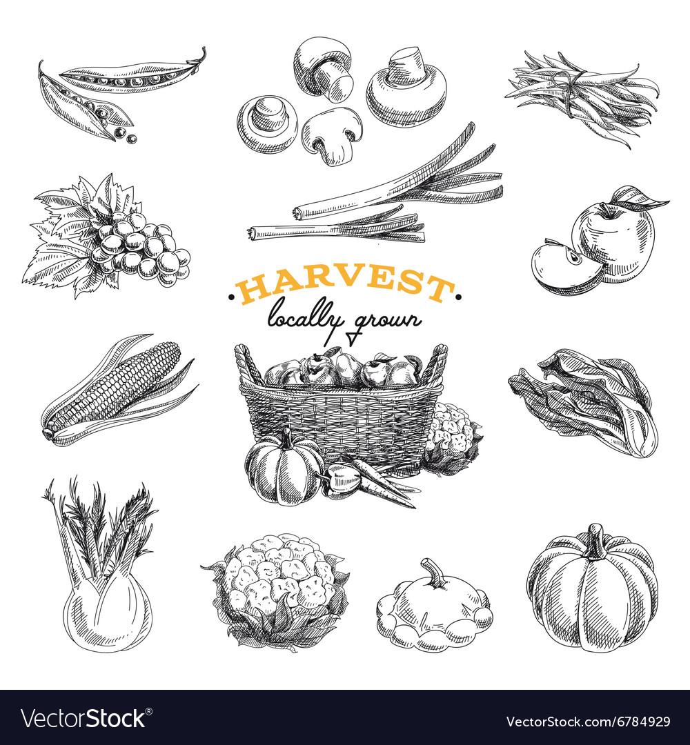 Hand drawn sketch Harvest set
