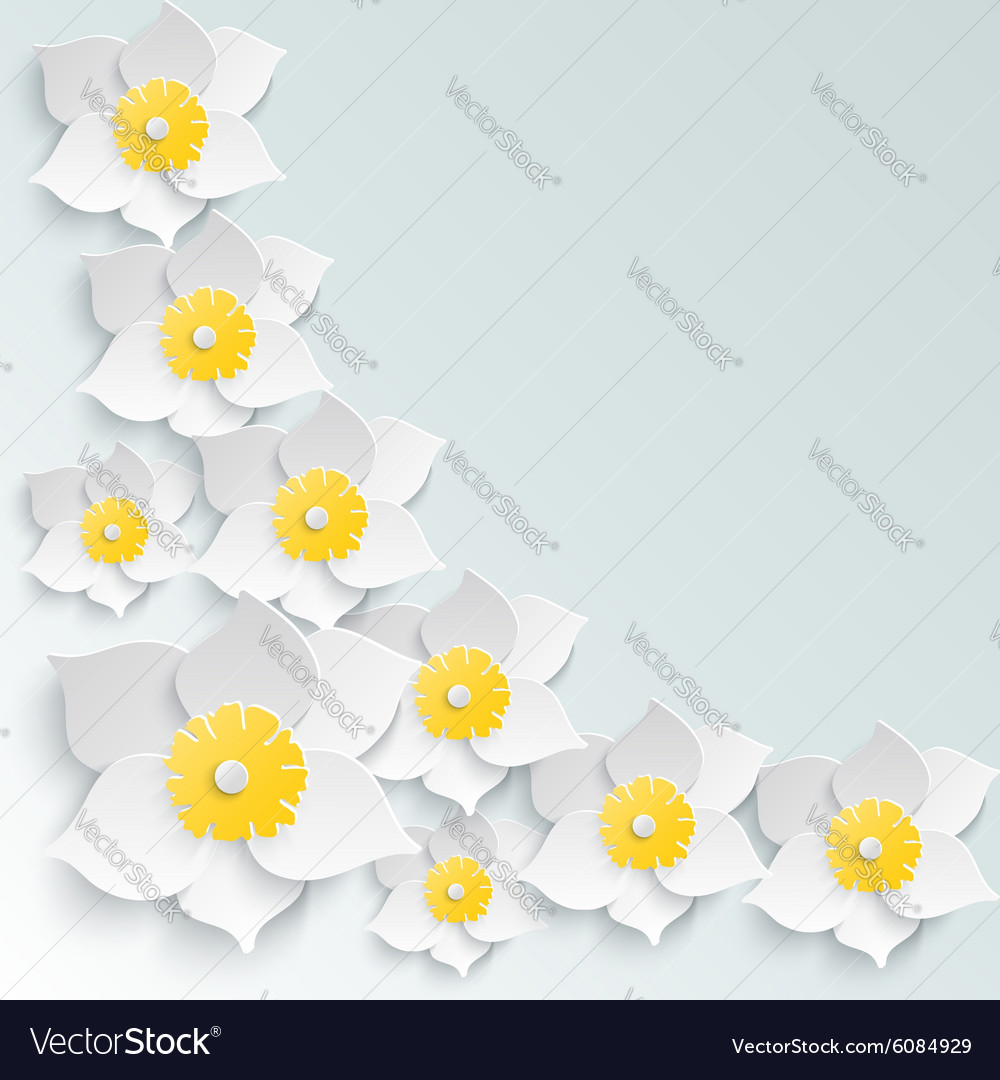 Spring background with white daffodils volume in