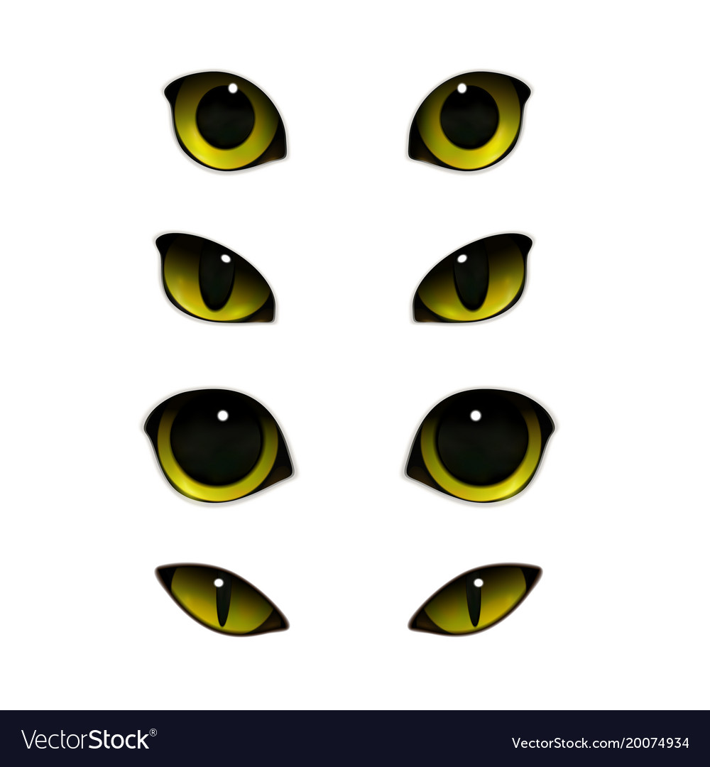 Cats eyes realistic set vector image