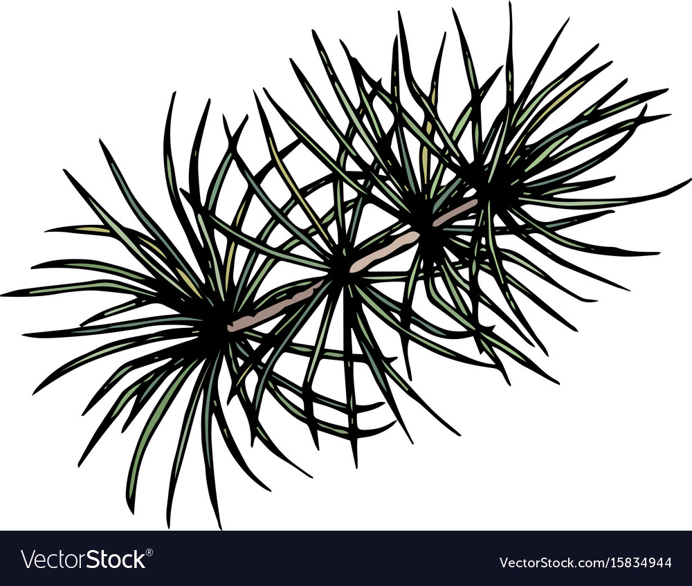 Pine or cedar tree branch ink
