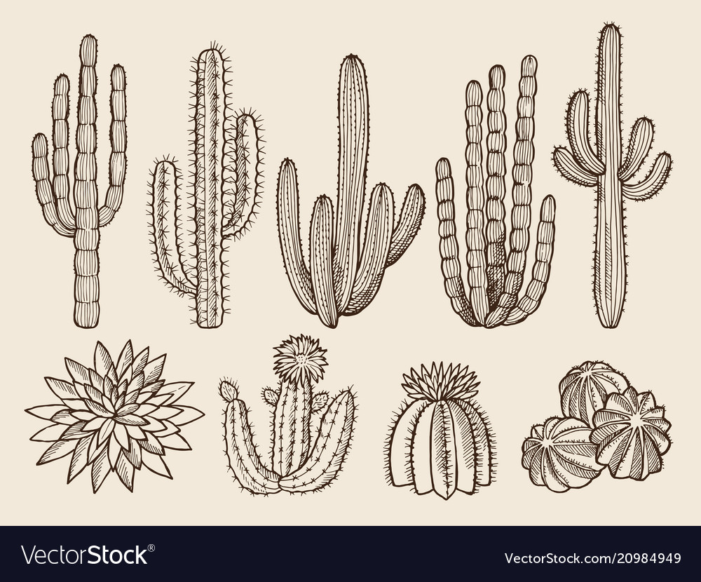Sketch hand drawn of cactuses and