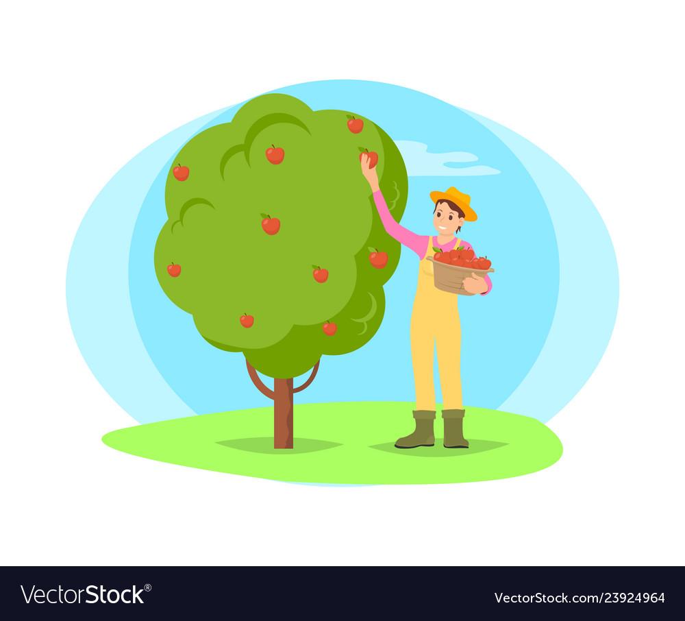 Farmer picking fruit from tree in garden cartoon