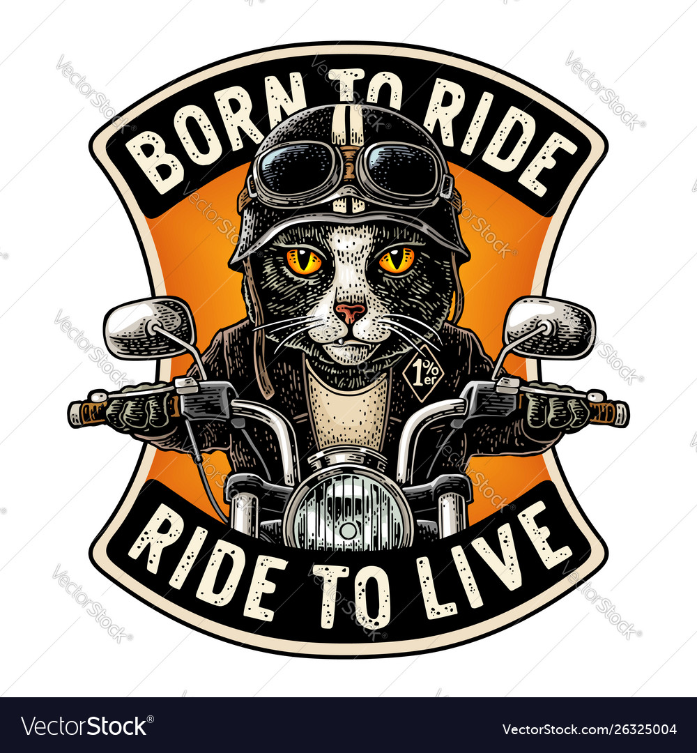 Cat driving a motorcycle rides vintage