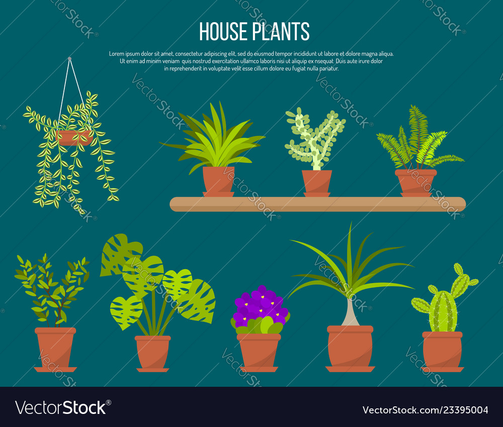 Collection of indoor house plants and flowers in