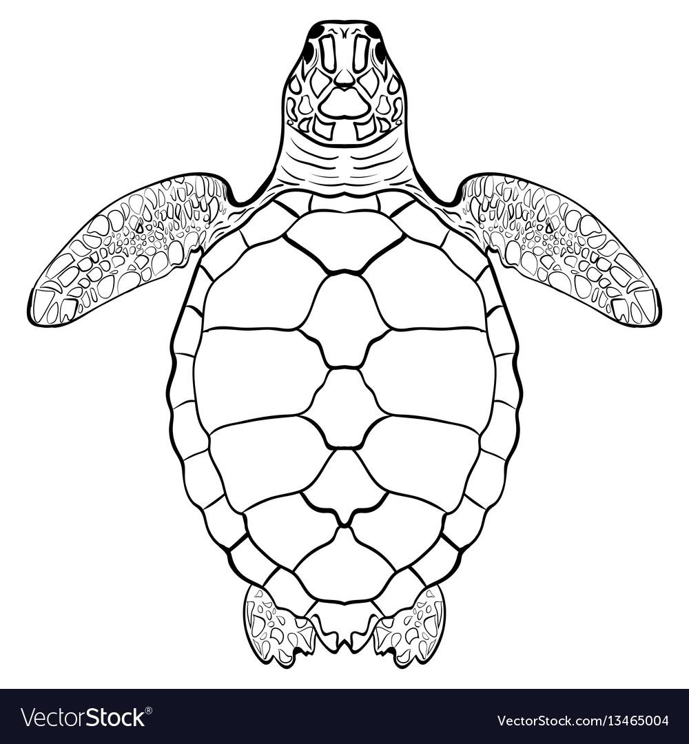 Sea turtle hand drawn