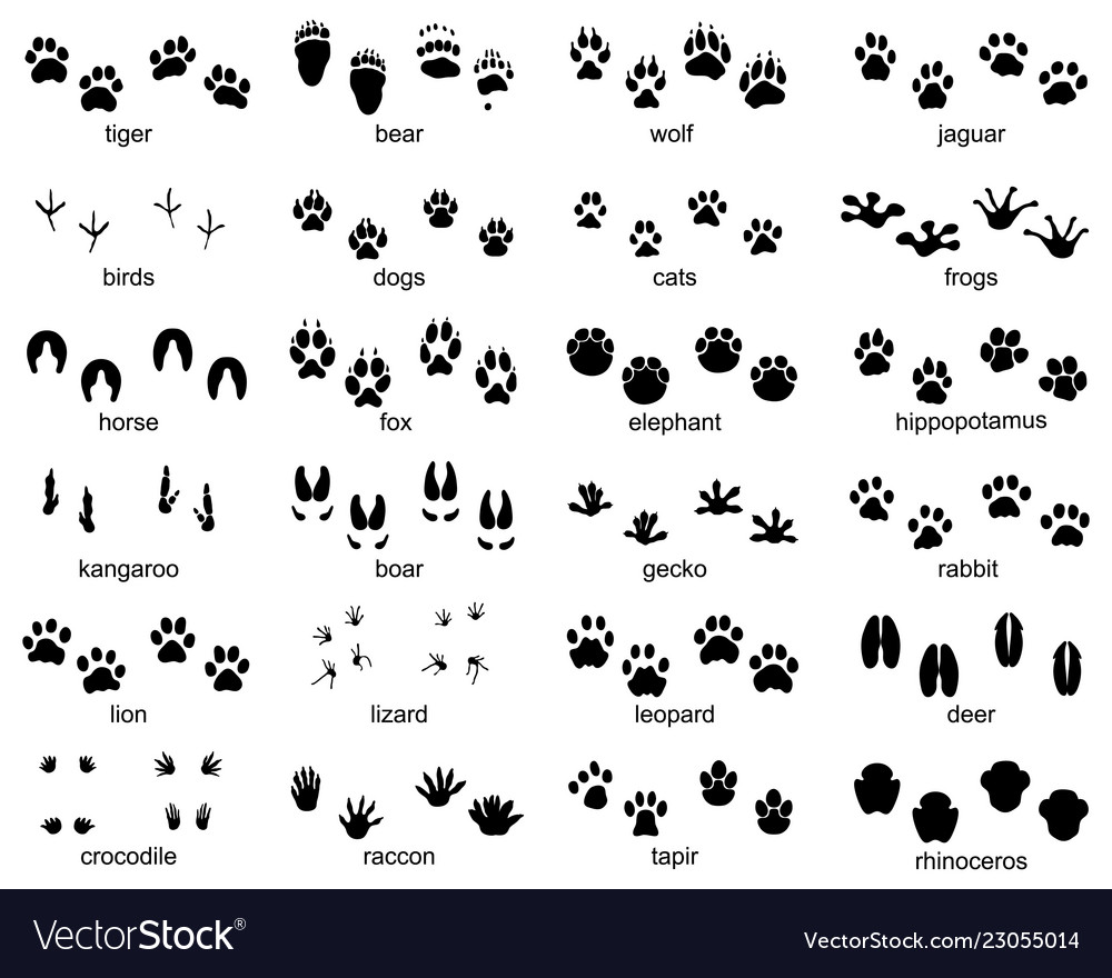 Set footprints wild animals