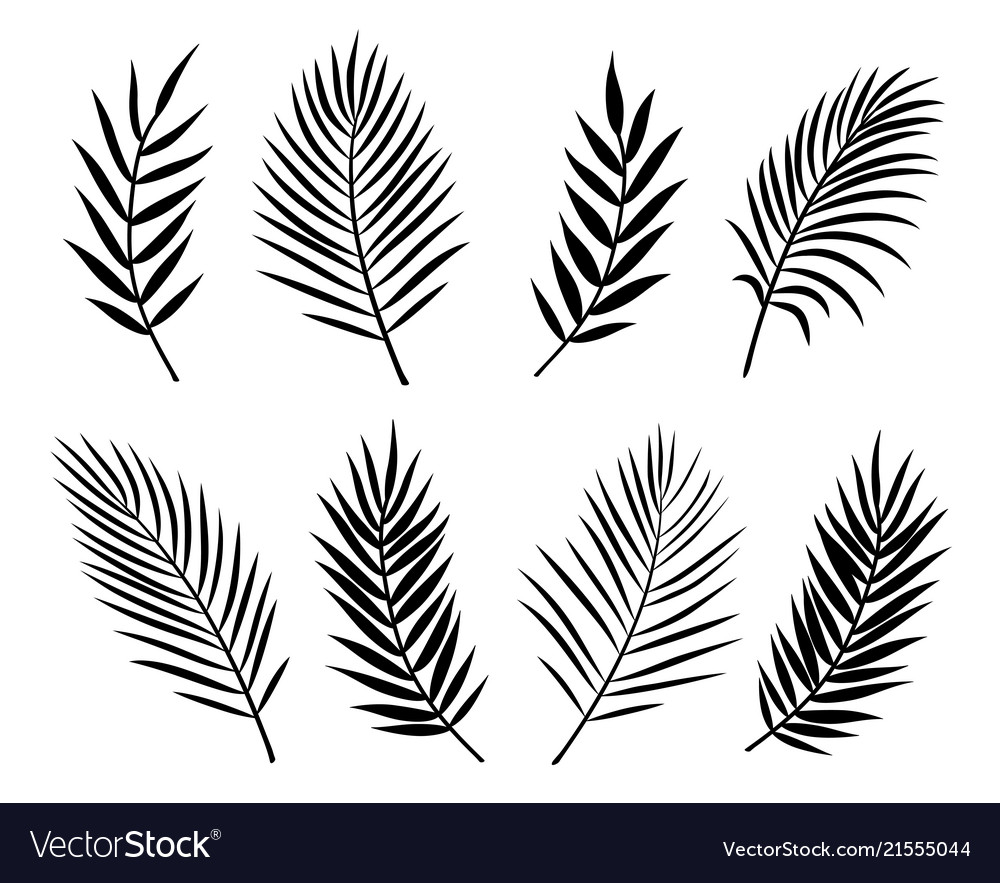 Black isolated palm leaves and branches on white vector image