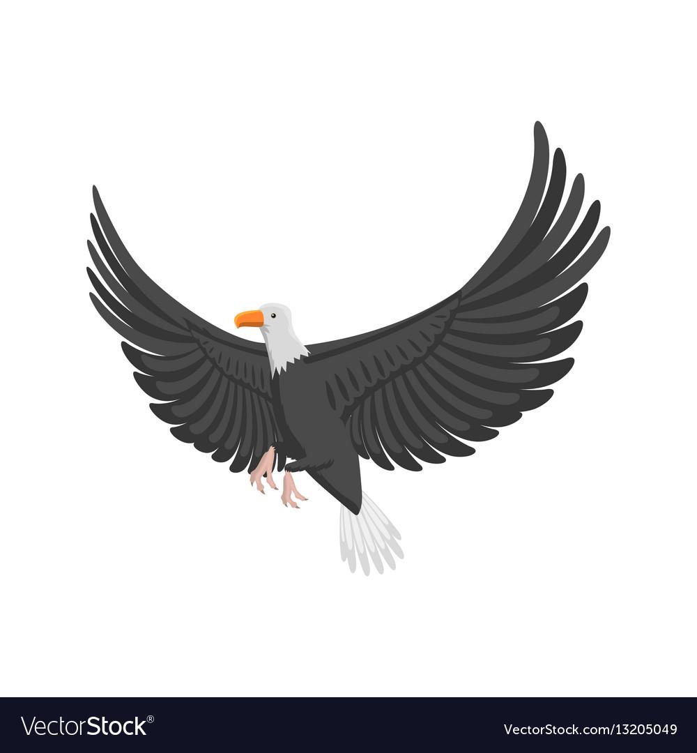Eagle flying bird vector image