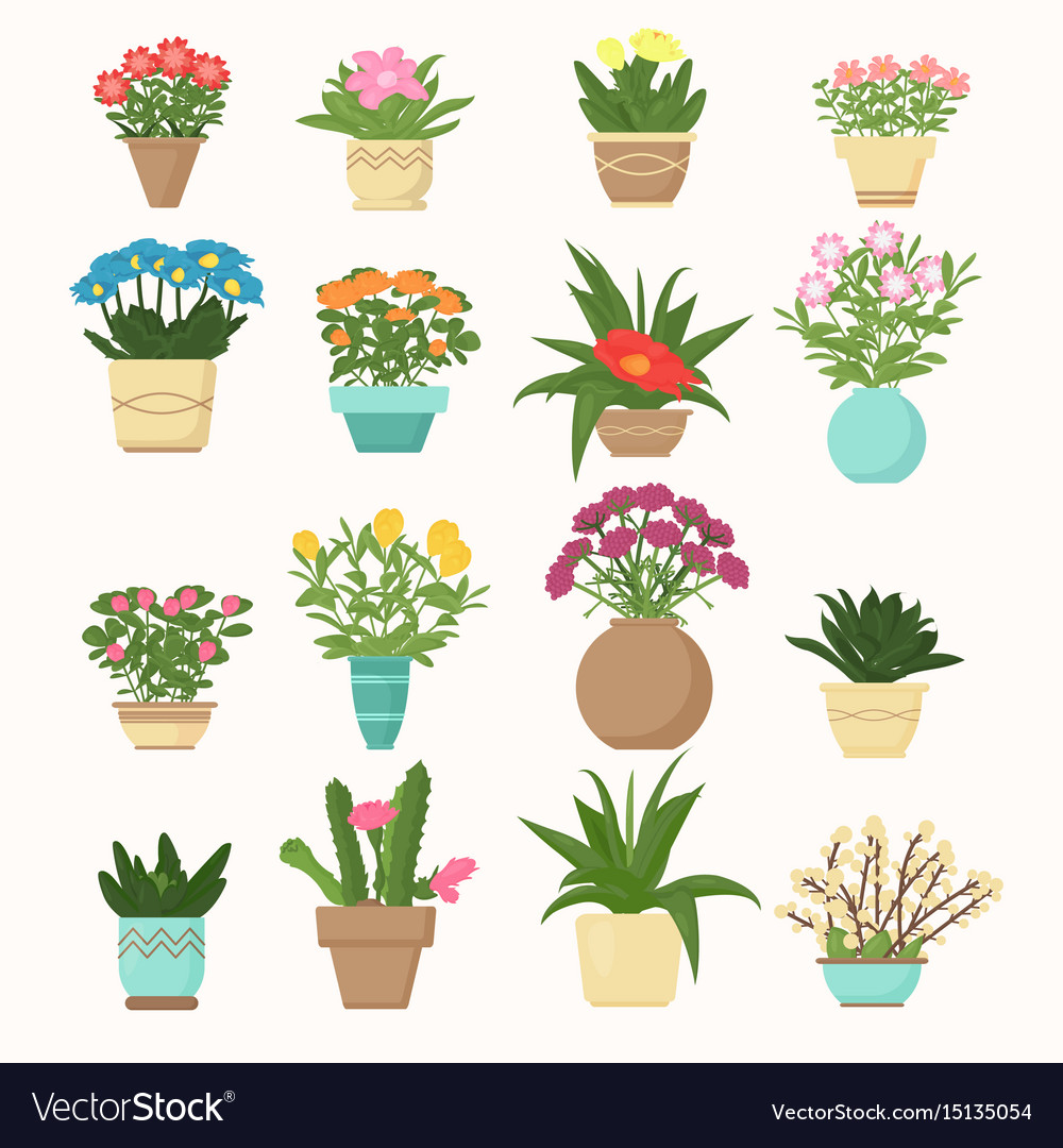 Colorful set of flowers and