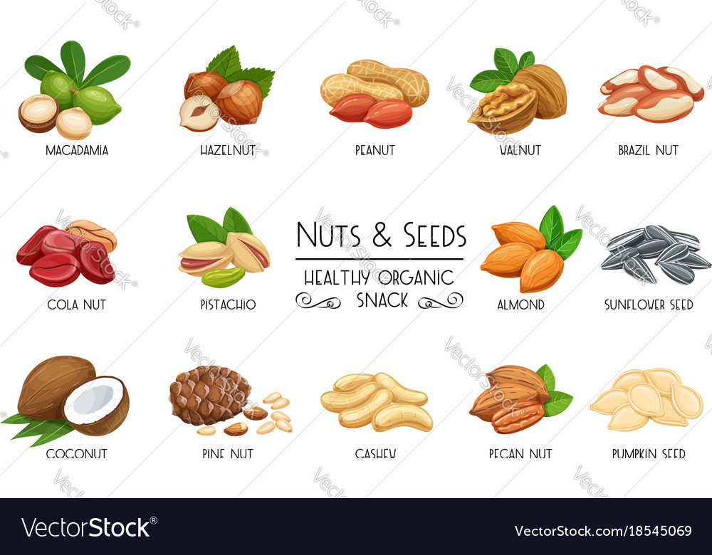 Set icons nuts and seeds