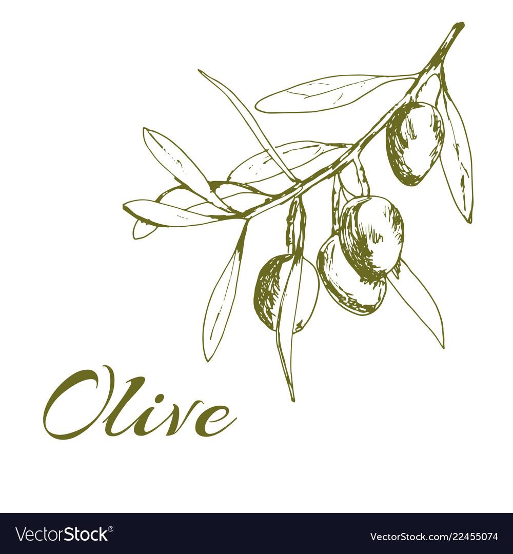 Hand-drawn logo of olives
