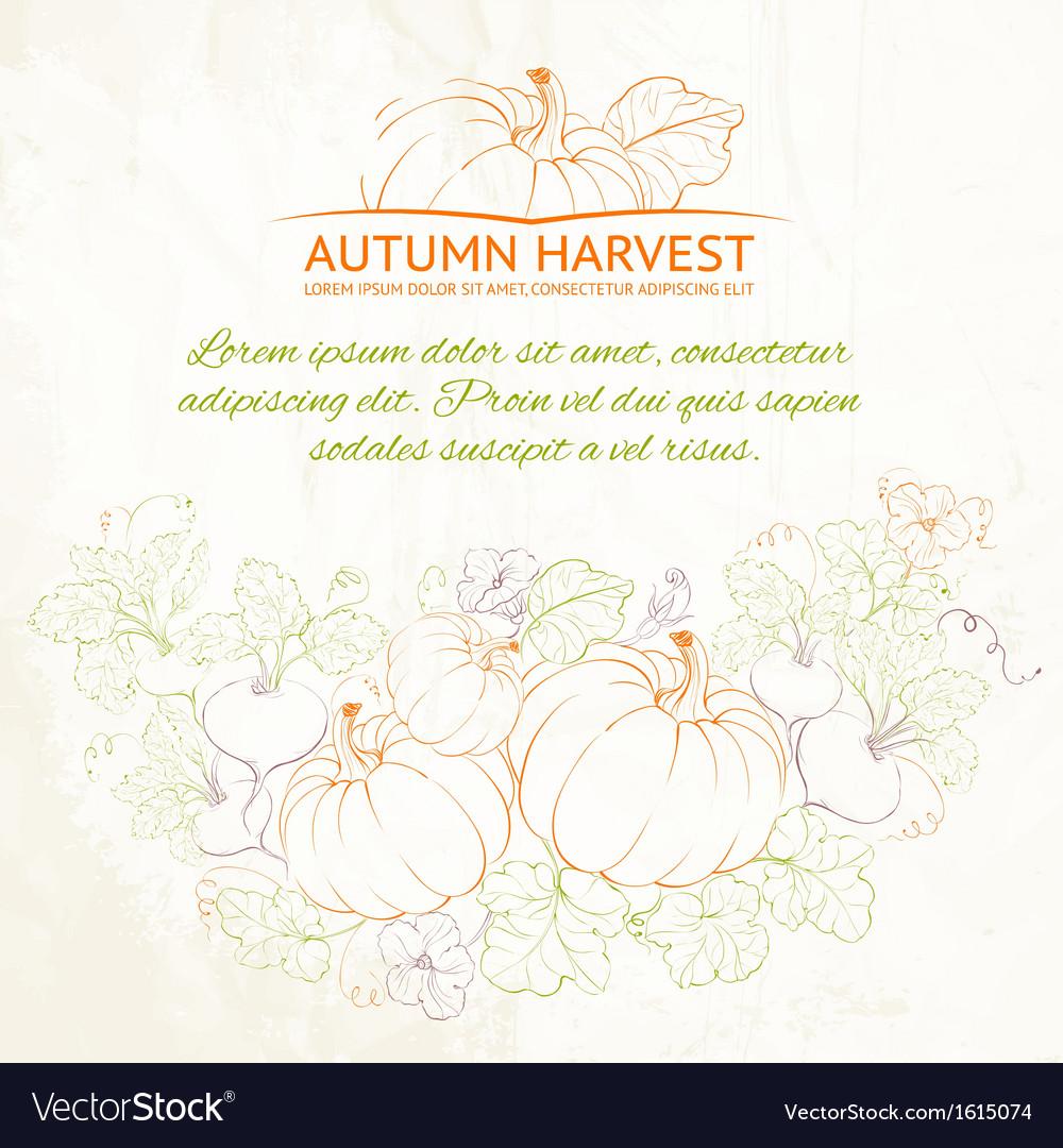 Pumpkins Autumn harvest