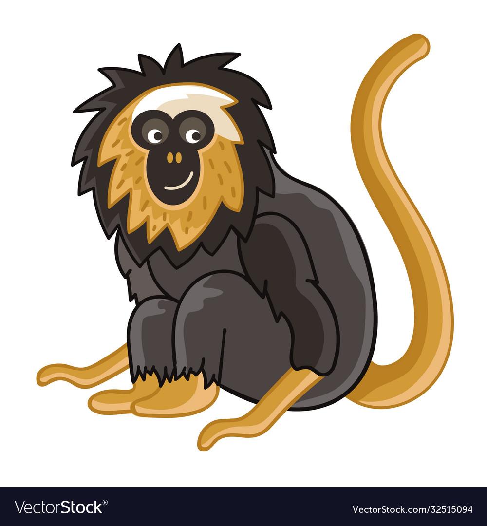 Golden-headed lion tamarin isolated wild ape