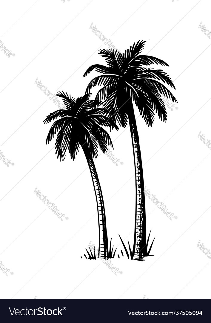 Tropical coconut palm trees black and white hand