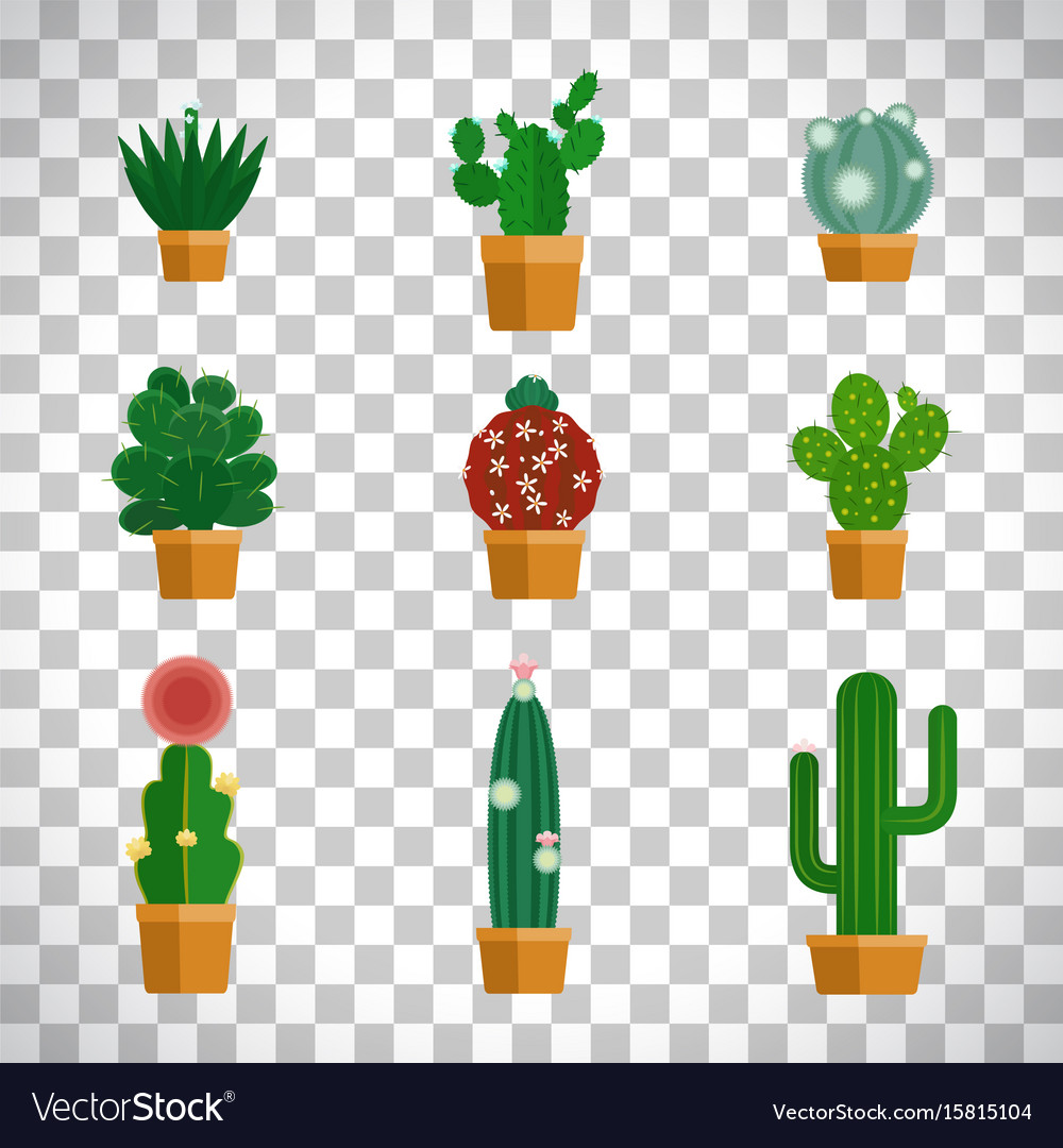 Cactus icons in flat style vector image