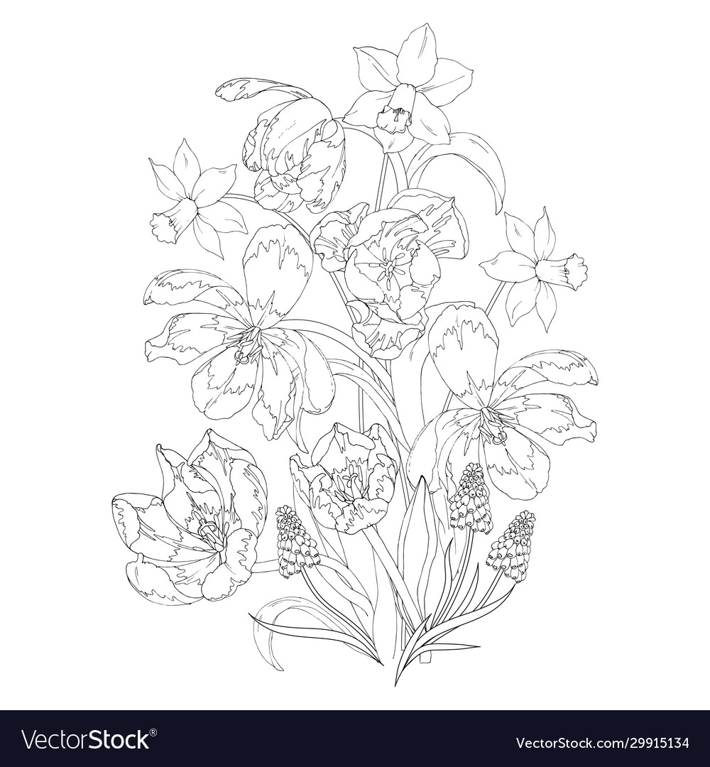 Blooming Spring Flowers Tulips Daffodils And Mus Vector Image