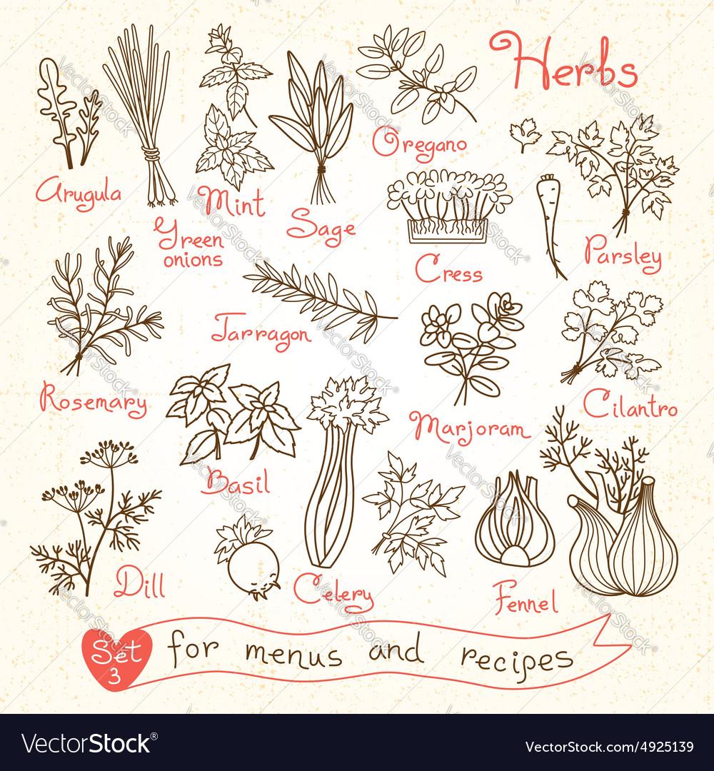 Set drawings of herbs for design menus recipes vector image